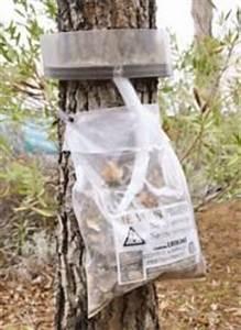 Piège à Chenilles Processionnaires : insecticide comparez les prix pour professionnels sur ~ Dailycaller-alerts.com Idées de Décoration
