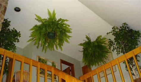 plante interieur mi ombre 9 plantes d int 233 rieur qui nettoient l air et qui sont