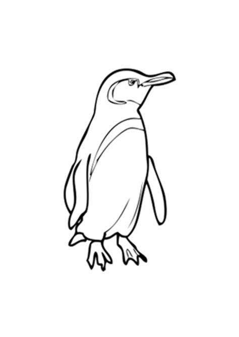 ausmalbilder galapogos pinguin pinguine malvorlagen