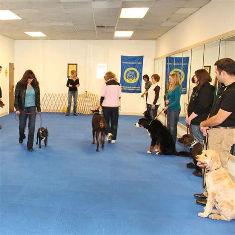 Dog Agility Mats   Dog Agility Flooring, Flyball Mats for Dogs
