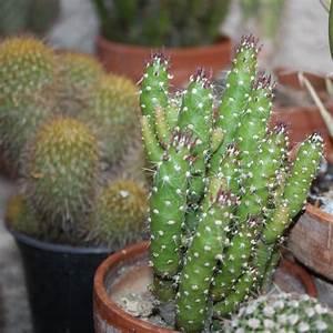 Comment Entretenir Un Cactus : l 39 esprit bio souffle sur graine de jardinier ~ Nature-et-papiers.com Idées de Décoration