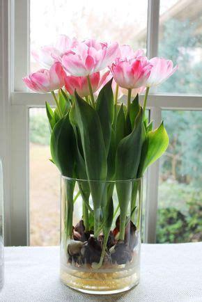 bulbi tulipani in vaso bulbi in vaso di vetro