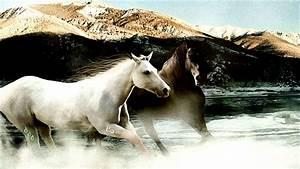 Animals Zoo Park: 9 White Running Horse Wallpapers, White ...
