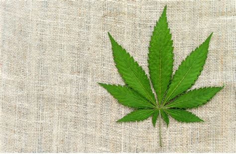 do you know how powerful hemp root actually is