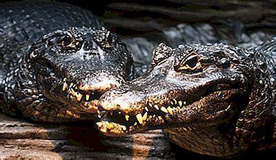de gevaarlijkste dieren van het amazone regenwoud