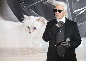 Choupette Chat Karl : choupette la chatte de karl lagerfeld presque aussi riche que dany boon closer ~ Medecine-chirurgie-esthetiques.com Avis de Voitures