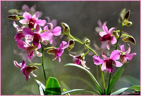 sejarah bunga anggrek ragam tanaman