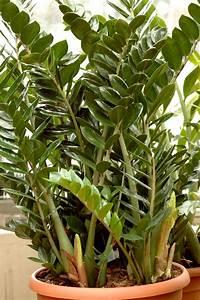 Plante Balcon Facile D Entretien : plante facile entretien profitez de cette plante facile ~ Melissatoandfro.com Idées de Décoration