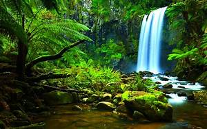 Amazon Rainforest Wallpapers - Wallpaper Cave