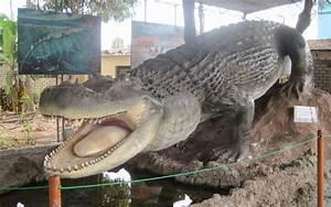 Purussaurus - Our Planet