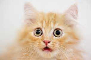 Image result for images of surprised cat