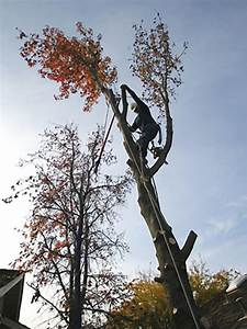 Tree Removal  You May Want To Consider An Expert