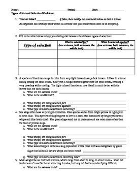 Types Of Natural Selection Worksheet By Briana Ransom Tpt
