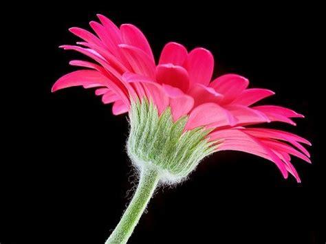delicious flower photographs