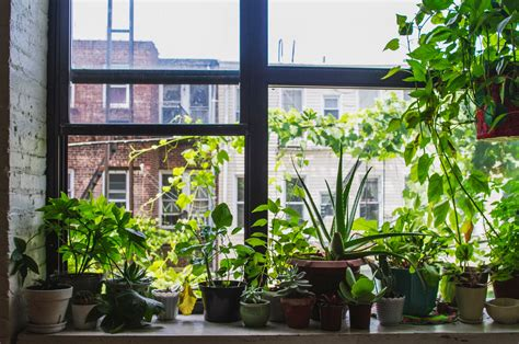 Window Potted Plants by How To Use Plants As Feng Shui Cures