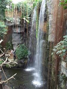 lied jungle-see the monkeys - Picture of Henry Doorly Zoo ...