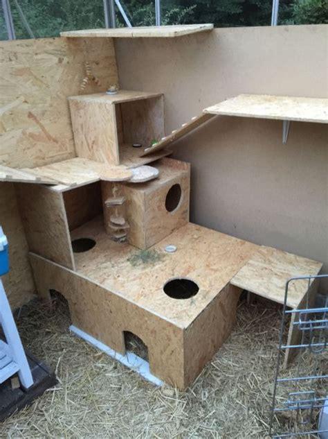 rabbit play area rabbit playground indoor rabbit