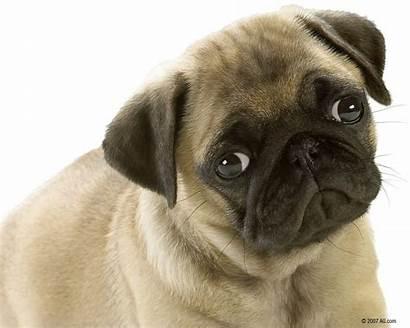 Puppies Wallpapers Puppy Desktop Dogs Animals Park