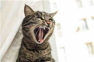 Angry Cat Royalty Free Stock Photography - Image: 35306667