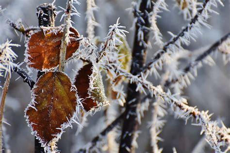 kostenlose foto baum natur ast schnee kalt winter