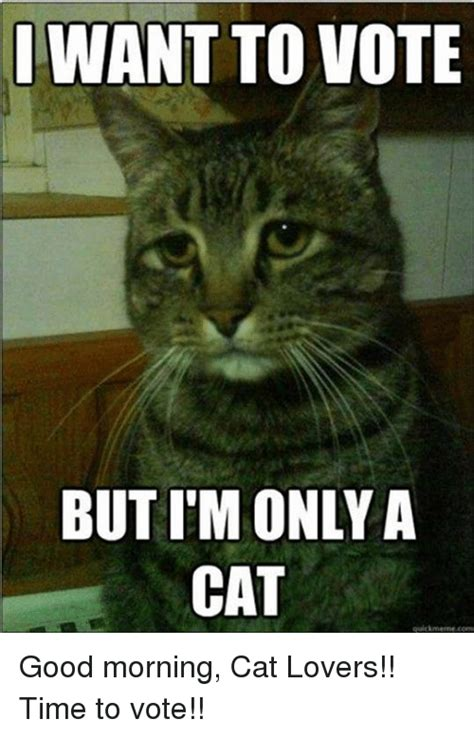Morning Cat Meme Search Morning Cats Memes On Me Me