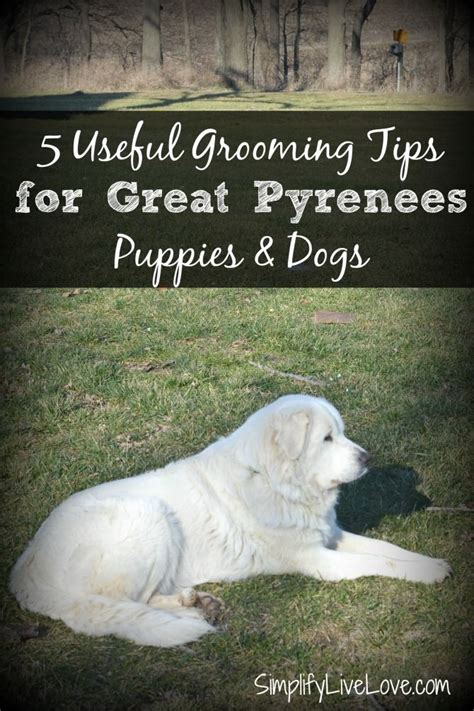 great pyrenees shedding help 25 best ideas about great pyrenees puppy on