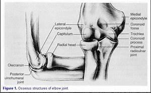 11 Best Images About Elbow On Pinterest