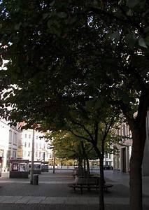 Kleiner Baum Mit Breiter Krone : cercis siliquastrum gemeiner judasbaum 01 als kleiner ~ Michelbontemps.com Haus und Dekorationen