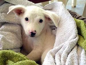 Adorable Abandoned Island Puppy Snuggles For Photo