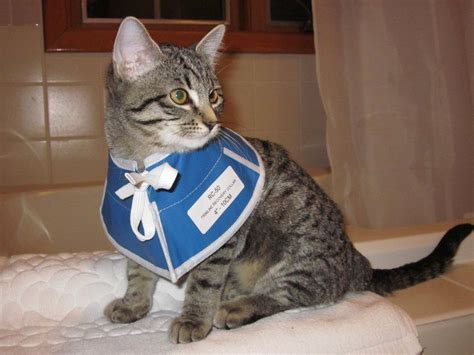 Nursing Care For Your Cat