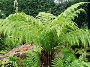 Plante D Intérieur Haute : quelles esp ces de plantes d 39 ombre cultiver dans nos jardins ~ Premium-room.com Idées de Décoration