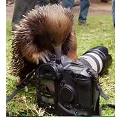 Cool Animals Pictures With Cameras