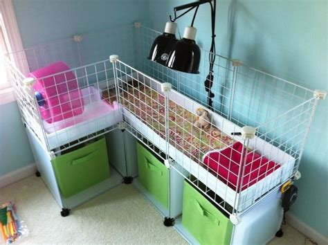 Heat L For Pygmy Hedgehog by 25 Best Ideas About Hedgehog Cage On Hedgehog