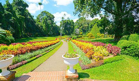Botanischer Garten Sri Lanka by Peradeniya Flower Garden Sri Lanka Garden And Modern