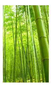 Forest Wallpaper HD   PixelsTalk.Net