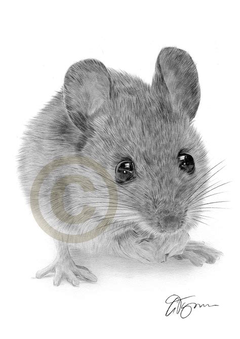 pencil drawing   mouse  artist gary tymon