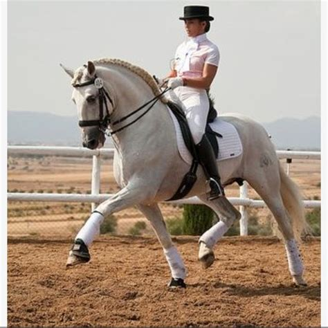 dressage horse riding saddle andalusians spanish abuse comment know