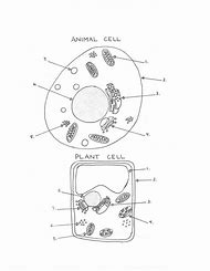 Best 25 ideas about plant cell worksheet find what youll love plant and animal cell diagram worksheet ccuart Gallery
