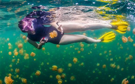 Trips in Micronesia - Wilderness Travel