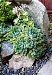 succulent border rock garden groundcovers rock gardens