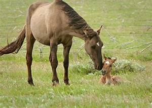 Baby Horse with Mother - XciteFun.net