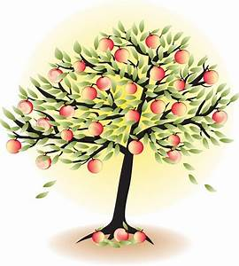 Fruit Tree With Leafs And Apples Isolated On White