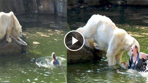 Angry Polar Bear Attacks Woman In Water
