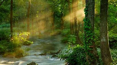 Forest Nature Sunbeams Japan Natural Asia East