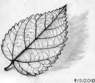 leaf sketch feeling fall diycrafts