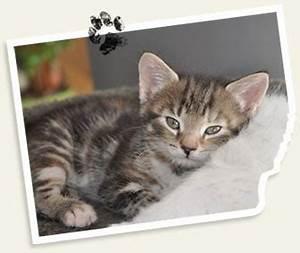 Was Brauchen Katzen : katzen tierheim linz ~ Lizthompson.info Haus und Dekorationen