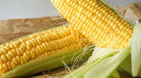 cuisiner des epis de mais epis de maïs pochés ou grillés recettes de maïs