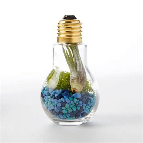diy light bulb terrarium adorable home
