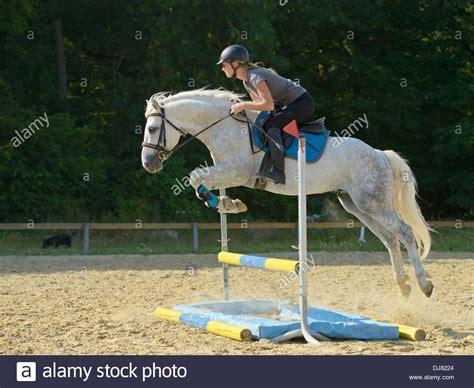 connemara pony jumping stallion sternbergs alamy sam silver