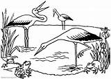 Pond Coloring Pages Frogs Storks Printable Adults sketch template